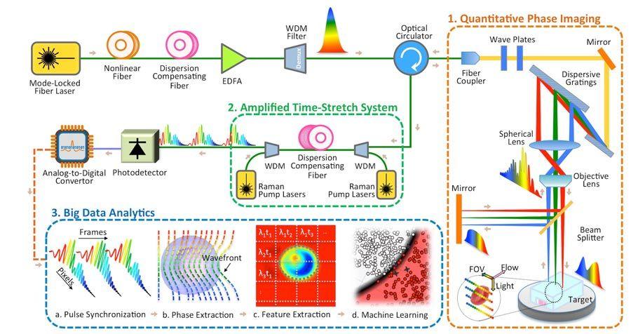 Abbildung 3: Diagramm des Systems für Time Stretch Quantitative Phase Imaging und Analyse.