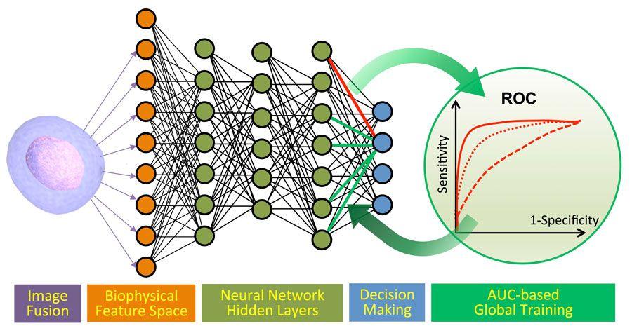 Abbildung 4: Machine-Learning-Pipeline: Klassifikation von Krebszellen und Algenzellen.