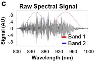 Figure 3. A recorded interferogram divided into two bands.