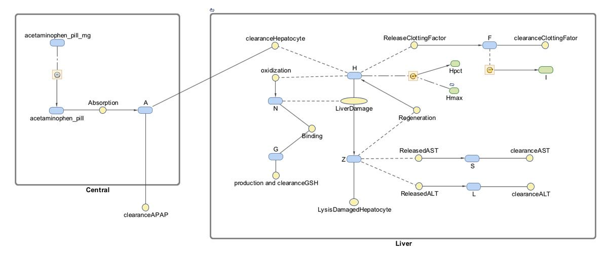 Figure 1. SimBiology model describing oral absorption, metabolism, and toxicity of acetaminophen.