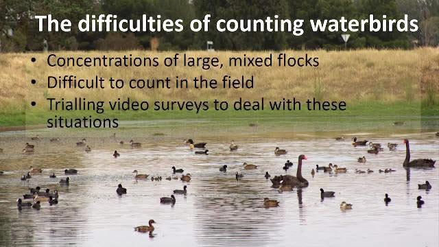 Fallstudie: Fortschritte in der Wildtierforschung: Entwicklung einer Lösung zur Verarbeitung von Videomaterial von Wasservögeln