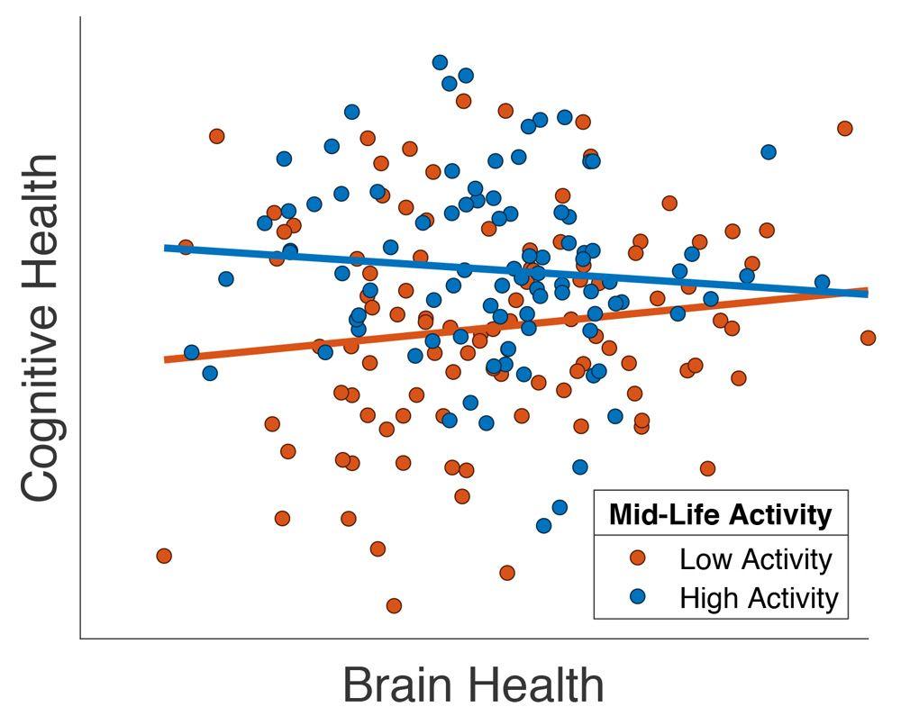 Graph, der zeigt, dass die Gehirngesundheit älterer Patienten verbessert wird, wenn sie von einem hohen Maß an sozialer Aktivität im mittleren Lebensalter berichten