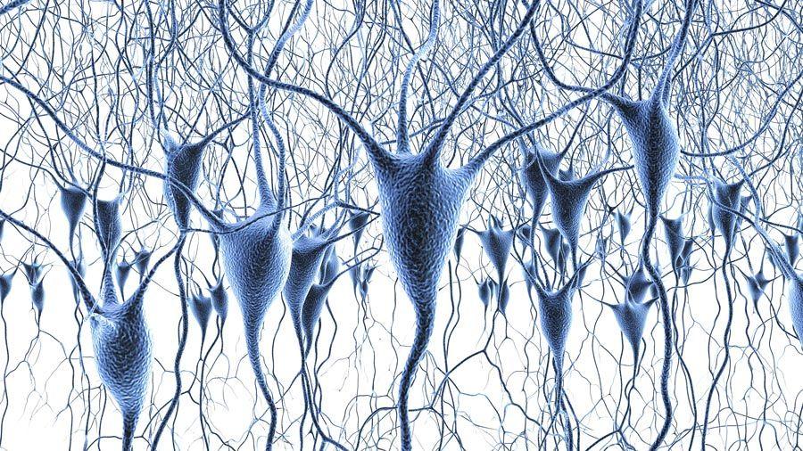 Zell- und System-Neurowissenschaft